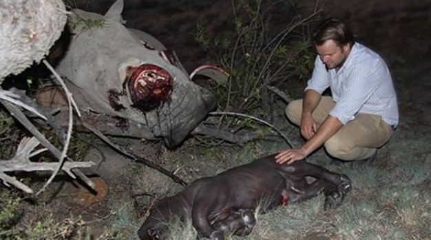 Rhino poaching and the Australian National Institute of Complementary Medicine – is there alink?